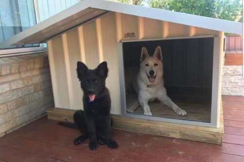 Cream dog kennel built with a dog inside and dog outside